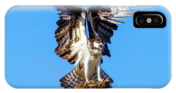 Ospreys iPhone Case - Two  Talons Full by Mike Dawson