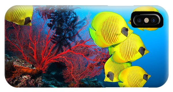 Bahamas iPhone Case - Underwater Image Of Coral Reef And by Frantisekhojdysz