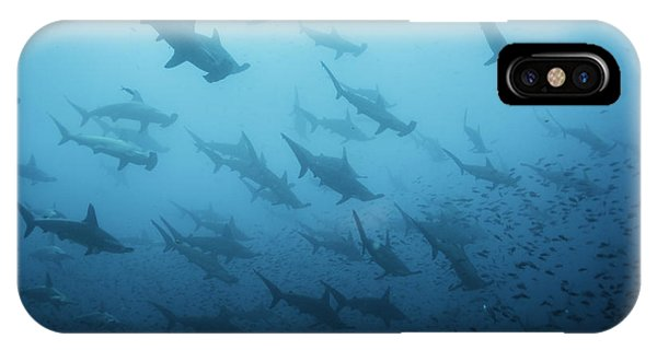 Sea Life iPhone Case - Underwater View Of Scalloped Hammerhead by Wildestanimal