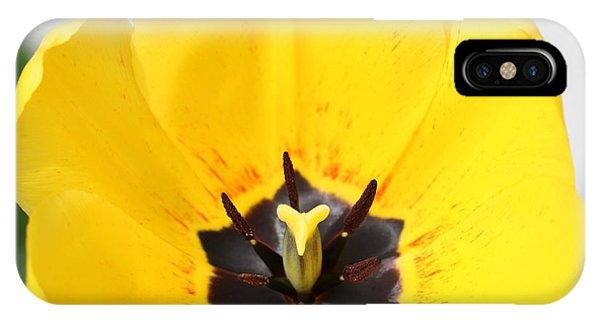 iPhone Case - Uplifting Yellow Tulip by Carol Groenen