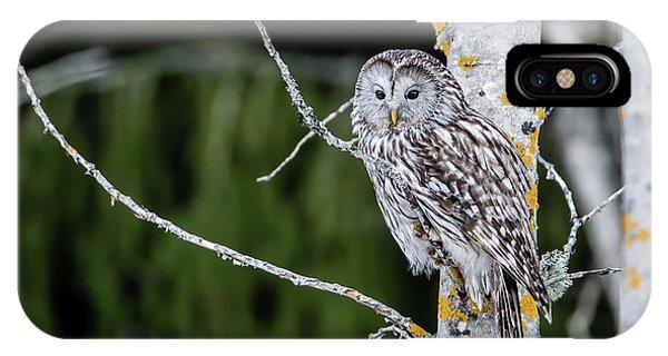 Ural Owl Perching On An Aspen Twig IPhone Case