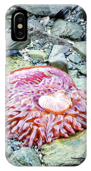 Usa, Alaska A Christmas Anemone Open Phone Case by Margaret Gaines