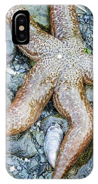 Usa, Alaska A Sea Star On The Beach Phone Case by Margaret Gaines