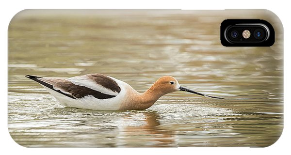 Usa, Colorado American Avocet Swimming Phone Case by Jaynes Gallery