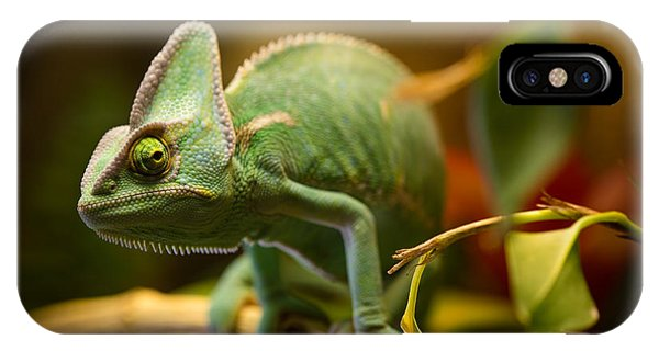 Small iPhone Case - Veiled Chameleon Chamaeleo Calyptratus by Lukas Gojda