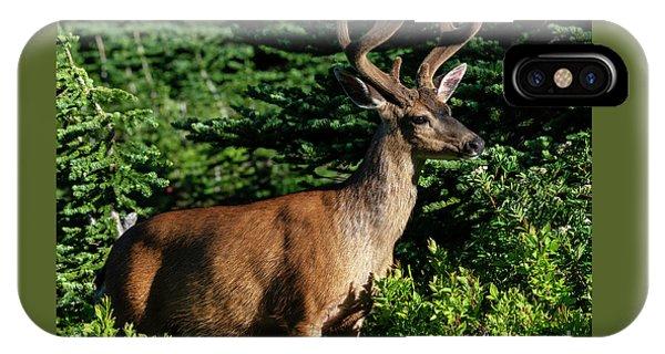 Mule Deer iPhone Case - Velvet Buck by Mike Dawson