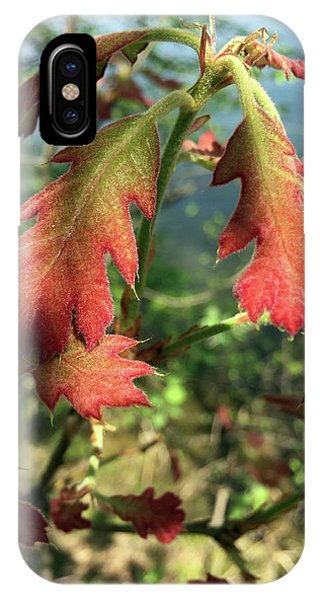 Velvet New Oak Leaves IPhone Case