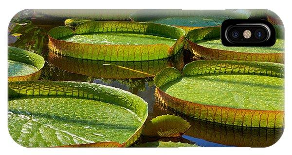 Aquatic Plants iPhone Case - Victoria Amazonica. Victoria Regia by Artens