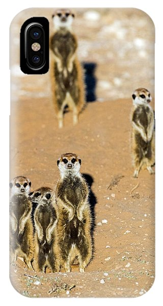 iPhone Case - View Of Standing Meerkats Suricata by Panoramic Images