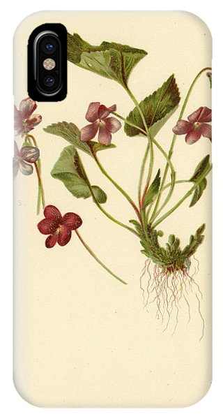 Viola Cucullata  Common Blue Violet IPhone Case
