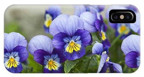 Botany iPhone Case - Violas by Catherine Eckert