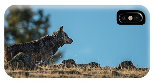 IPhone Case featuring the photograph W61 by Joshua Able's Wildlife