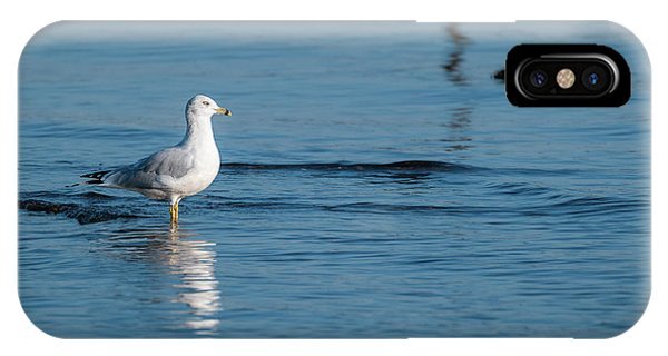 Wading Ring-billed Gull IPhone Case