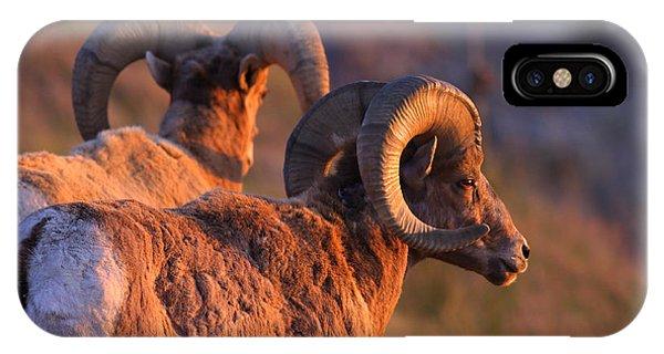 Rocky Mountain Bighorn Sheep iPhone Case - Warm Touch by Kadek Susanto