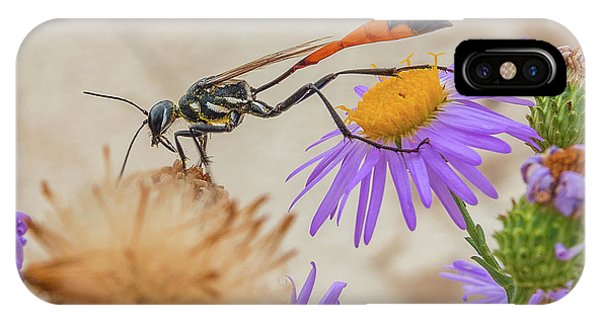 Wasp At White Sands IPhone Case