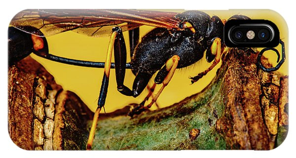 Wasp Just Had Enough IPhone Case