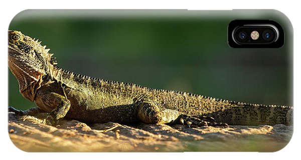 IPhone Case featuring the photograph Water Dragon Lizard Outdoors by Rob D Imagery