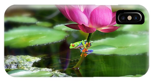 Water Lily And Little Frog IPhone Case
