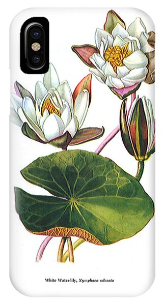 iPhone Case - Water Lily by Zal Latzkovich