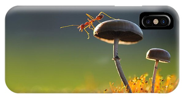 Small iPhone Case - Weaver Ant Want To Jump From A Mushroom by Robby Fakhriannur