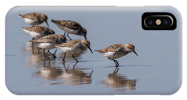 Western Sandpipers And Reflection IPhone Case