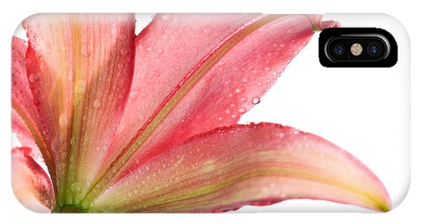 Water Droplets iPhone Case - Wet Pink Lily From Below Against White by Johan Swanepoel
