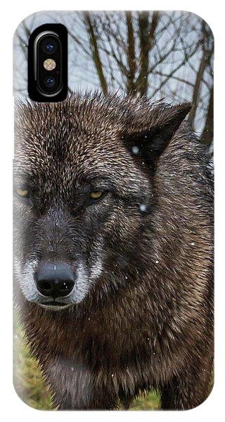 Wet Wolf IPhone Case