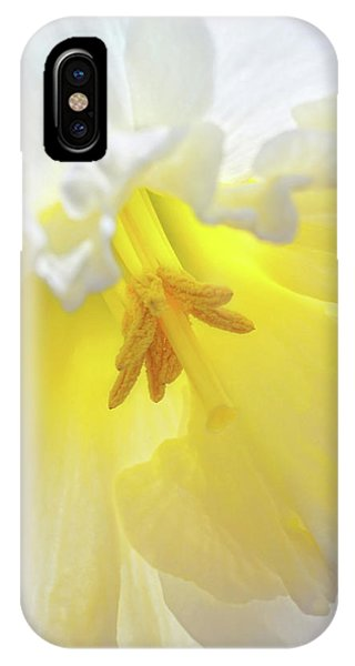 When Daffodils Bloom IPhone Case