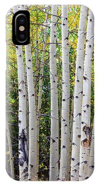 IPhone Case featuring the photograph White Bark Golden Forest by James BO Insogna