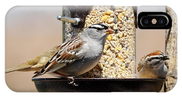 Eating iPhone Case - White-crowned Sparrow, Zonotrichia by Sylvie Bouchard