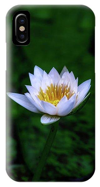 White Lotus IPhone Case
