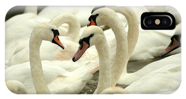 Swan iPhone Case - White Swans On A Canal In Stratford by Paul Banton