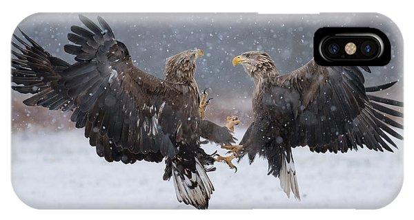 Crow iPhone Case - White Tailed Eagle Haliaeetus Albicilla by Piotr Krzeslak