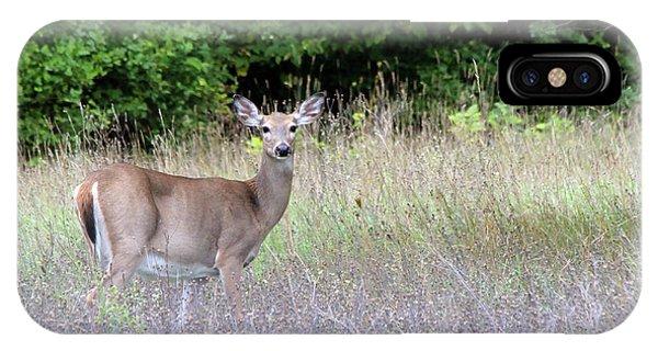White Tale Deer IPhone Case