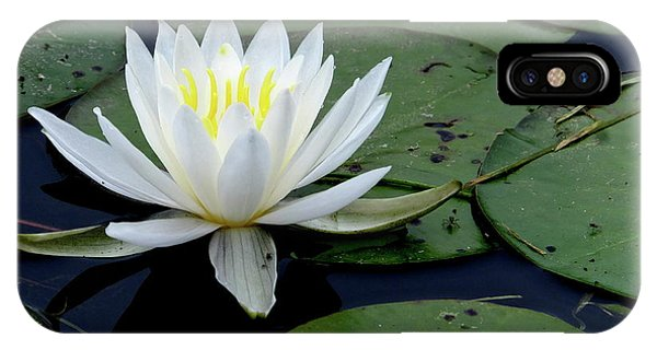 White Water Lilly IPhone Case