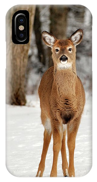 White Tailed Deer iPhone Case - Whitetail In Snow by Christina Rollo
