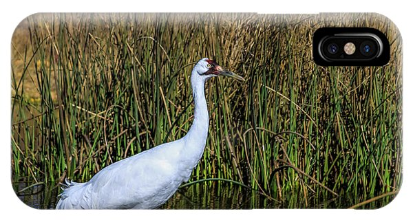 Whooping Crane In Pond IPhone Case