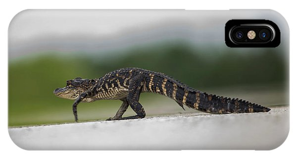 Why Did The Gator Cross The Road? IPhone Case
