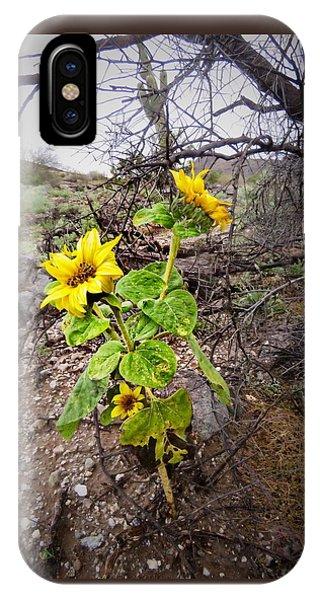 Wild Desert Sunflower IPhone Case