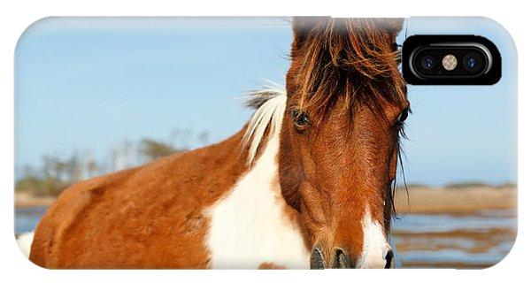 Seashore iPhone Case - Wild Horse At Chincoteague National by Jay Yuan