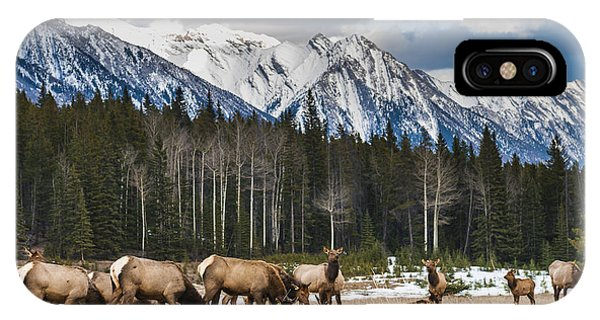 Banff iPhone Case - Wild Mountain Elk, Banff National Park by Bgsmith