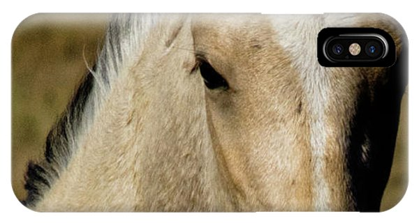 IPhone Case featuring the photograph Wild Mustangs Of New Mexico 5 by Catherine Sobredo