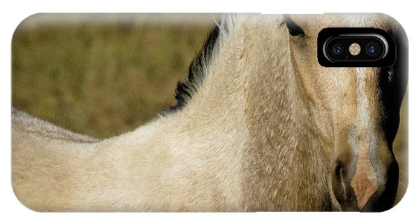 Wild Mustangs Of New Mexico 5 IPhone Case