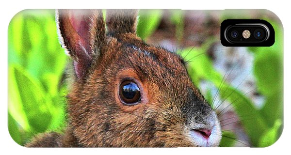 Wild Rabbit IPhone Case