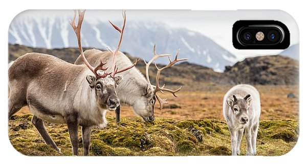 Male iPhone Case - Wild Reindeer Family - Spitsbergen by Incredible Arctic