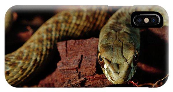 Wild Snake Malpolon Monspessulanus In A Tree Trunk IPhone Case