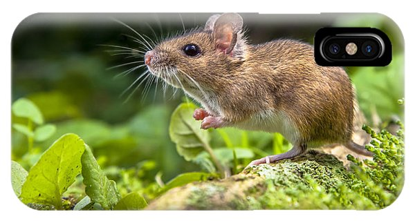 French Landscape iPhone Case - Wild Wood Mouse Resting On The Root Of by Rudmer Zwerver