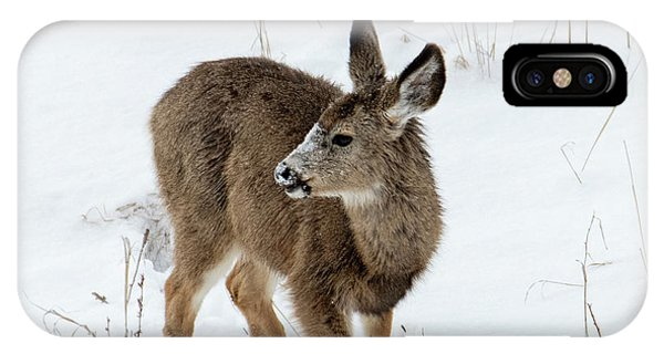 Mule Deer iPhone Case - Winter Bambi by Mike Dawson