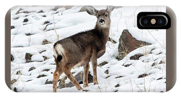 Mule Deer iPhone Case - Winter Coat by Mike Dawson
