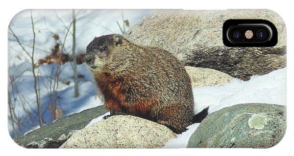 Winter Groundhog IPhone Case